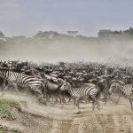 Tanzania Beste Safari en Zanzibar - 15 dagen