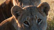 Evaluatie Zuid-Afrika reis: Ben