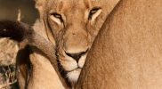Evaluatie Zuid-Afrika reis: Gerrit