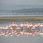 Kenia safari hoogtepunten - 7 dagen