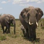 Kazuri Kenia - 15 dagen