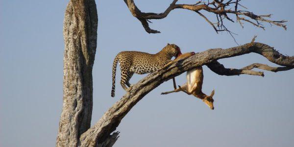 Kenia – Kazuri Safaris (107)