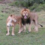Kenia-Kazuri-Safaris