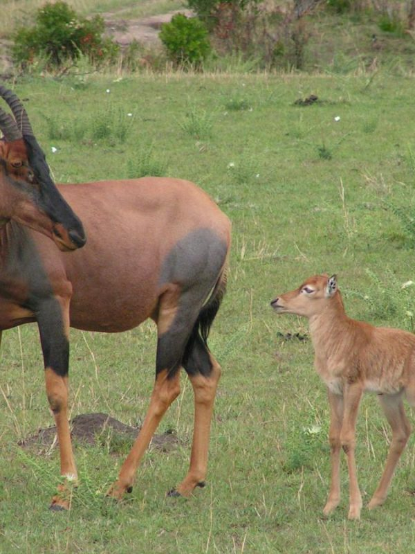 Kenia-Kazuri Safaris-Topi