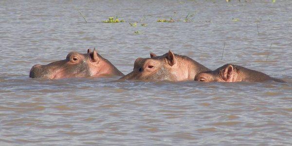 Kenia – Kazuri Safaris (129)