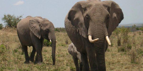 Kenia – Kazuri Safaris (131)