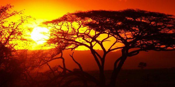 Kenia – Kazuri Safaris (139)