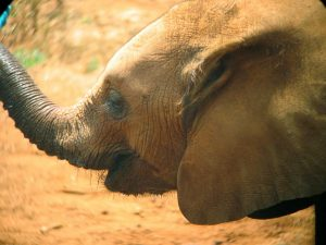 David Sheldrick - Nairobi - Kazuri Safaris