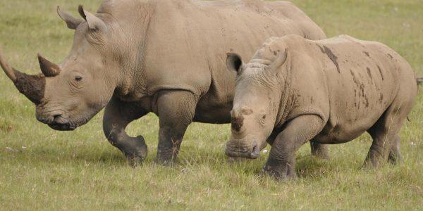 Kenia – Kazuri Safaris (23)