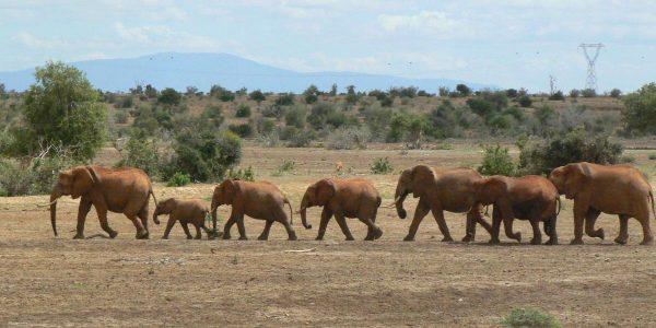 Kenia – Kazuri Safaris (30)