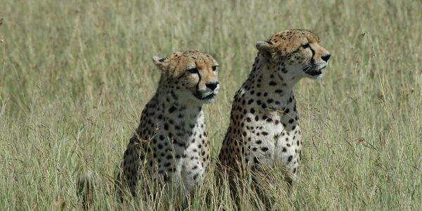 Kenia – Kazuri Safaris (59)