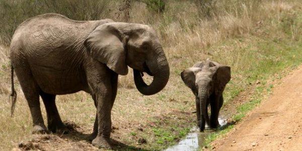 Kenia – Kazuri Safaris (66)