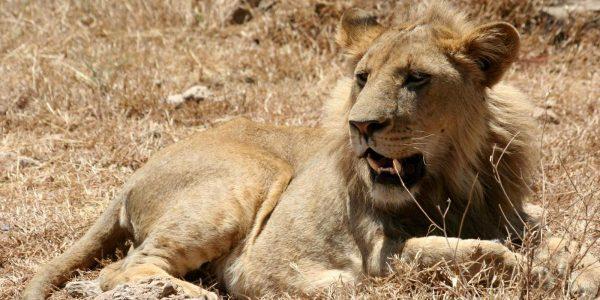 Kenia – Kazuri Safaris (79)