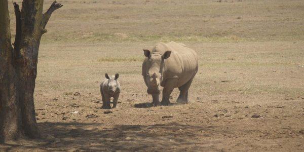 Kenia – Kazuri Safaris (99)