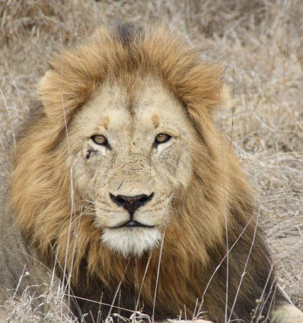 Kazuri Safaris - Kenia