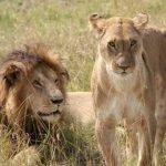 Kenia safari - 9 dagen