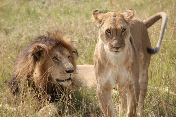 Kenia - Kazuri Safaris