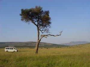 Kenia - Kazuri Safari