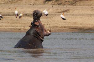Malawi-Kazuri Safaris