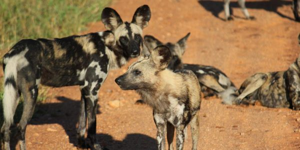 Malawi-Kazuri-Safaris (22)