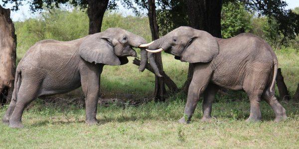 Malawi-Kazuri-Safaris (24)