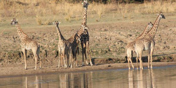 Malawi-Kazuri-Safaris (25)
