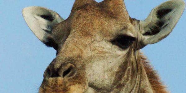 Namibie-Kazuri Safaris (10)