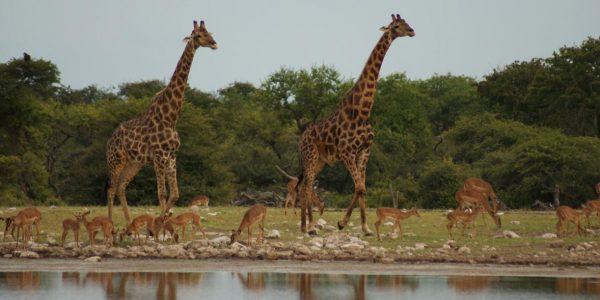 Namibie-Kazuri Safaris (30)