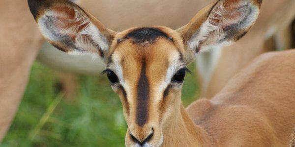 Namibie-Kazuri Safaris (75)