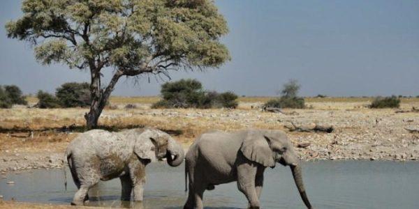 Namibie-Kazuri Safaris (80)