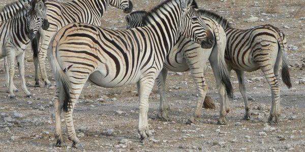 Namibie-Kazuri Safaris (97)