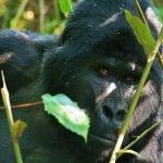 Internationale groepsreis Oeganda - 9 dagen