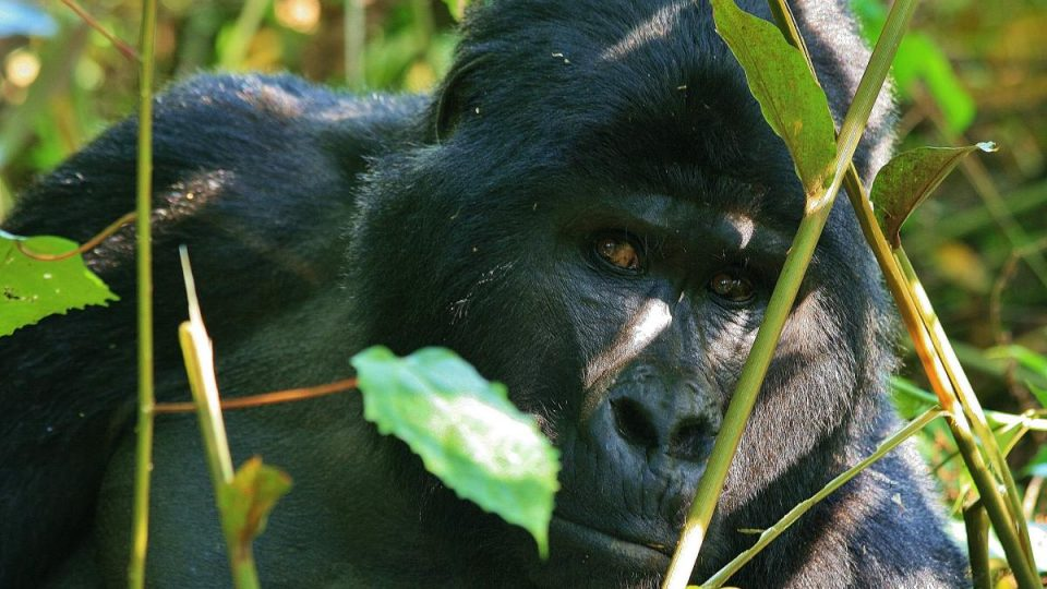 Oeganda-Kazuri Safaris