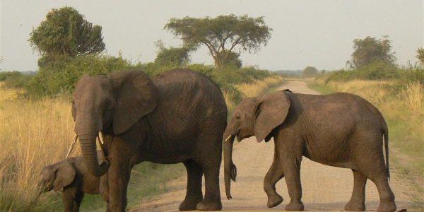 Oeganda-Kazuri-Safaris (176)