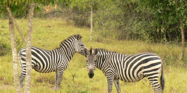 Oeganda-Kazuri-Safaris (181)