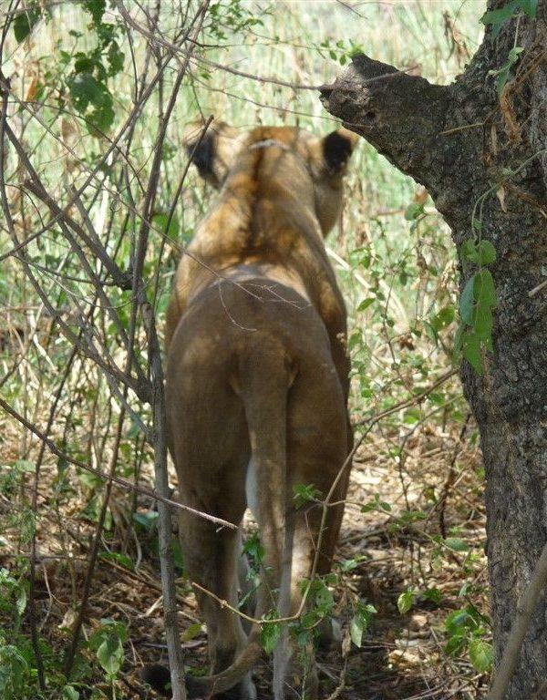 Kazuri Safaris-Oeganda