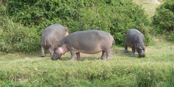 Oeganda-Kazuri-Safaris (216)