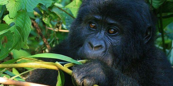Oeganda-Kazuri-Safaris (32)