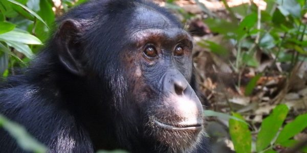 Oeganda-Kazuri-Safaris (40)