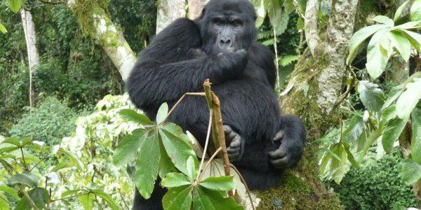 Oeganda-Kazuri-Safaris (44)