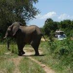 Kazuri Oeganda - rondreis 15 dagen