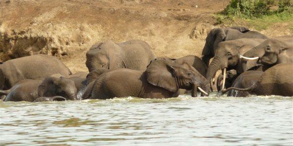 Oeganda-Kazuri-Safaris (93)