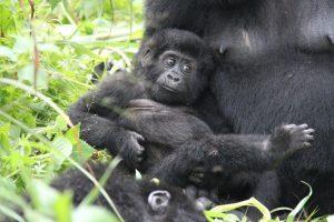 Oeganda-Kazuri-Safaris