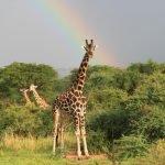Combinatiereis Tanzania & Oeganda - 14 dagen