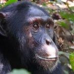 Combinatiereis Oeganda en Tanzania - 14 dagen