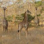 Zuid-Tanzania Hoogtepunten - 7 dagen