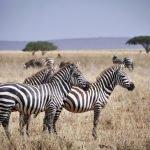 12 Day Lodge Safari Tanzania & Kenya