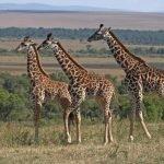 7 Day Lodge Safari North