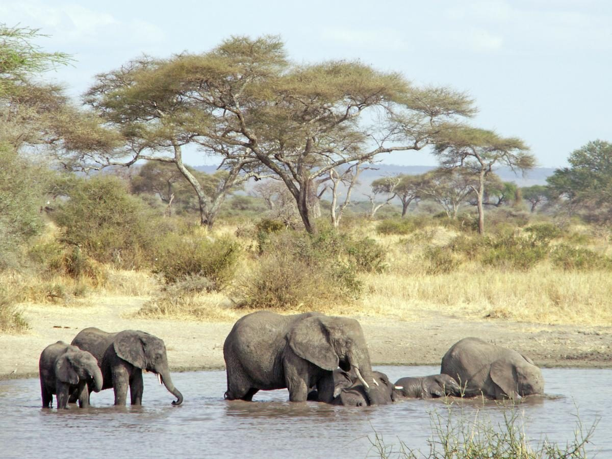 Zuid-Tanzania - Kazuri Safaris