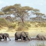 9 Day Lodge Safari South Tanzania
